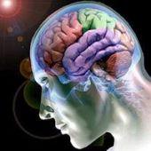 4 curiosidades interessantes sobre o cérebro humano