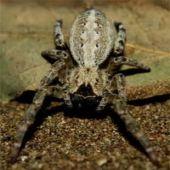Biólogos Afirmam que as Aranhas Tem Personalidade Própria