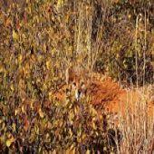 Camuflagem Animal - Você Consegue Identificar os Animais Escondidos?