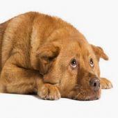 Como Salvar um Animal Envenenado