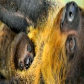 Como são os filhotes de animais selvagens?