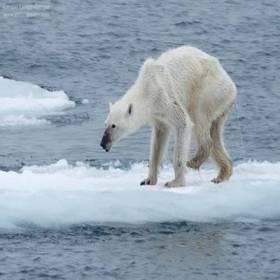 Mudança climática: ver para crer