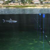 Nova tecnologia está sendo testada para afastar os tubarões das praias