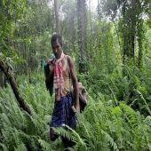 Você conhece Jadav Payeng? O Indiano que Plantou uma Floresta Sozinho